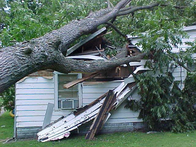 wind-damage